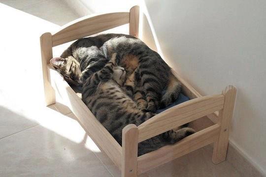 Как сделать котенку кровать своими руками