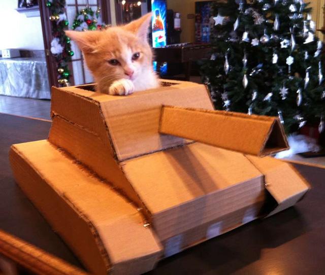 Картинки - Рыжий котенок в картонном танке